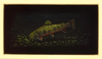 Brook Trout V