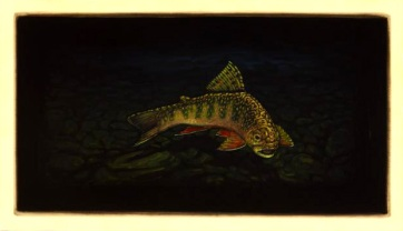 Brook Trout VI