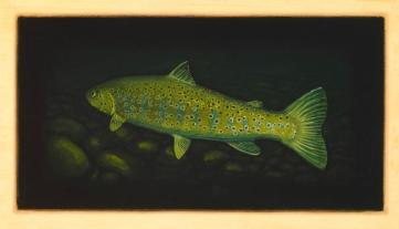 Brown Trout IV