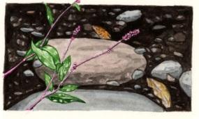 Esopus Flowers II