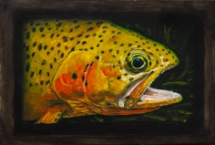 """Westslope Cutthroat Trout II, West Fork of Bitterroot River, Montana 6"""" x 8.75"""" Oils on Plaster Panel"""