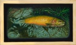 "Westslope Cutthroat Trout V, West Fork of Bitterroot River, Montana 15.5"" x 33"" Oils on Plaster Panel"