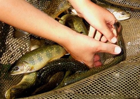 trout02