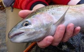 2013-11-16 12.18.31sam;s fish 72