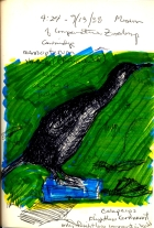 Sketchbook F 10 - Cormorant, Cambridge, MA