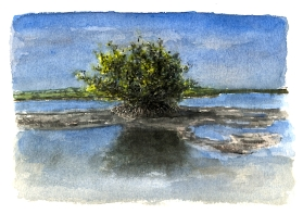 Sketchbooks L 14 - Mangrove on Beach - Key West, FL