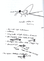 Sketchbook P 14 - Insect notes