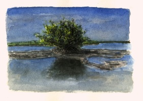 Sketchbooks L 14 - Mangrove - Key West, FL