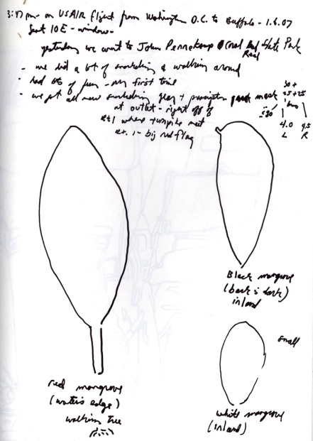 Sketchbooks O 10 - John Pennekamp Park Plants - On Flight from Washington DC to Buffalo