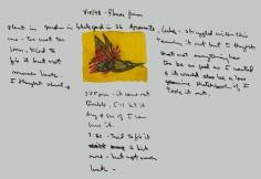 Sketchbooks Q 12 - Garden Flower - Agramonte, Cuba
