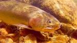 lamar fish