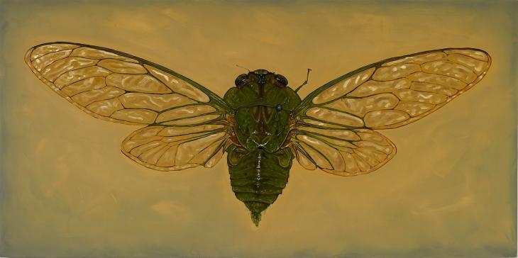 Alberto Rey 3-20-202034879 cicada 150